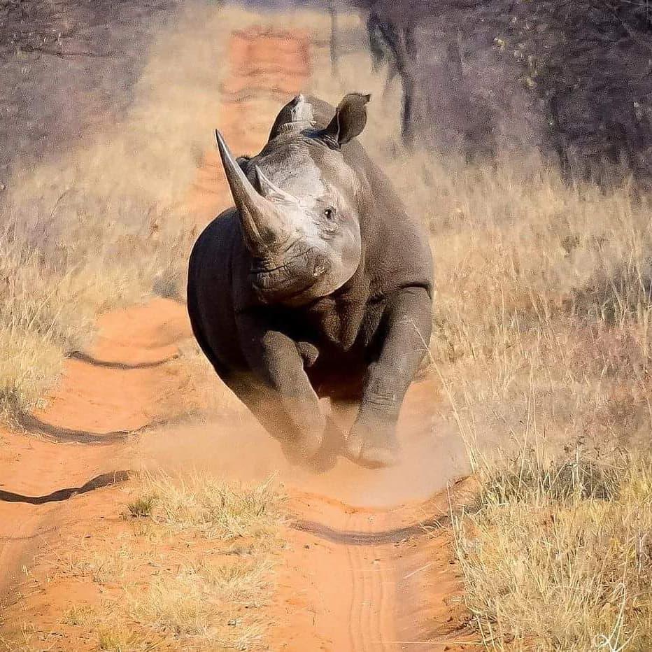rhinos7